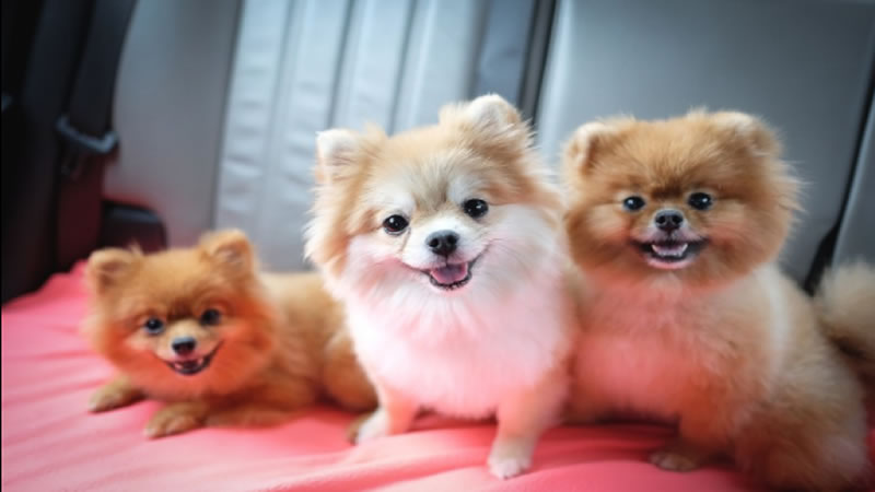 3 Tips para eliminar las malas conductas de tu perro