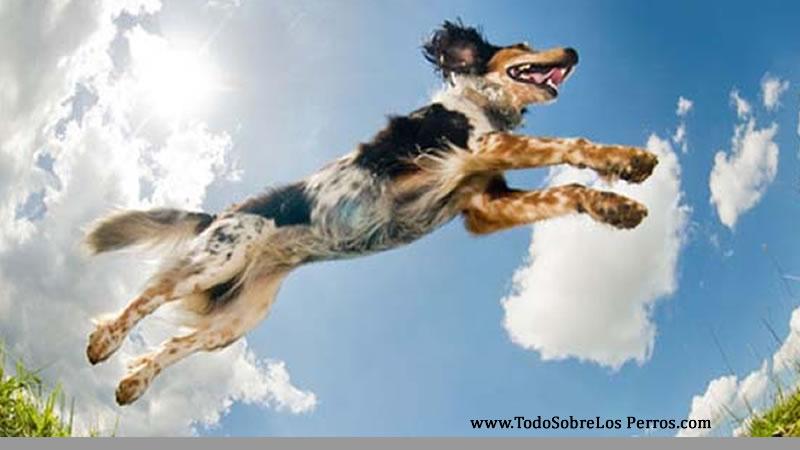 Cómo enseñarle a tu perro a no saltar a las personas