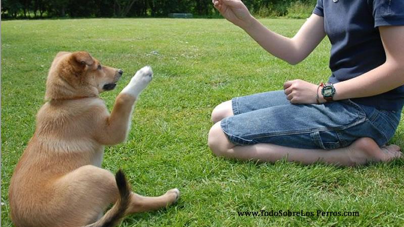 Cómo enseñarle un nuevo truco a tu perro