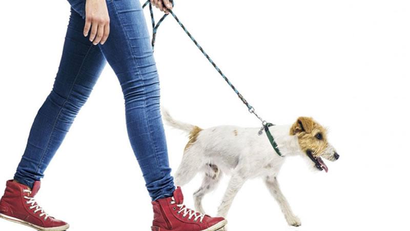 Como Sacar Tu Perro a Pasear
