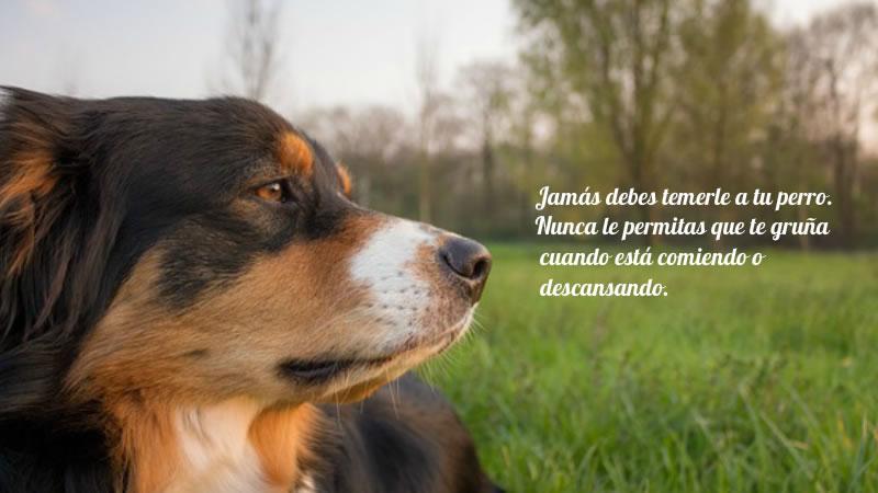 Conviértete en el líder de tu perro