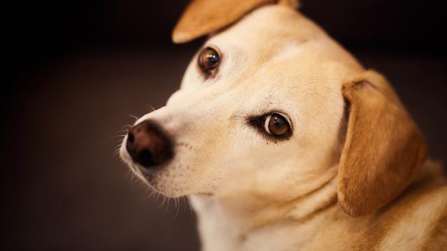 Los Dueños De Perros Prefieren Estar Con Su Mascota  Que Con Sus Amigos